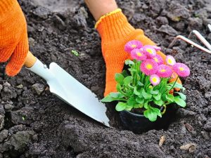rainbow gardening blog post garden beds 090118 featured image